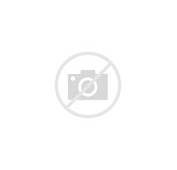 Tiger Face Tattoo On Upper Thigh