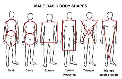 body biography definition the body shape descriptions used all too often by women s