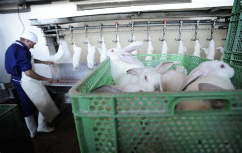 come fare una gabbia per conigli consigli per vivere felici con i conigli la terrazza di