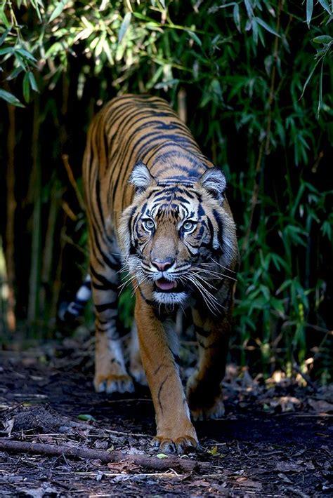 Tshirt Amazing Sumatera best 25 rainforest ideas on jungle
