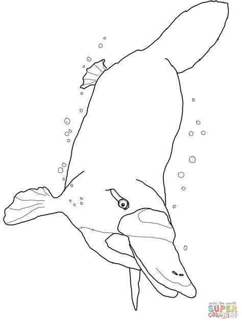 Platypus Swimming Underwater Coloring Page Free Platypus Coloring Page