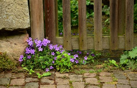 Wallsticker Purple Flower Bunga Ungu gambar menanam halaman rumput berkembang dinding
