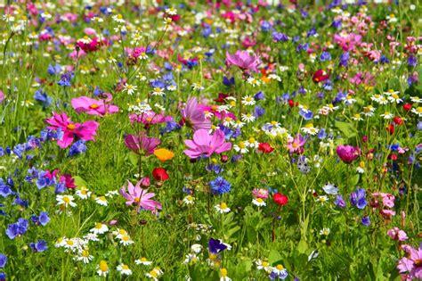 garten gestalten wildblumen blumenwiese anlegen und pflegen 187 detaillierte anleitung