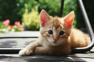 Red_<strong>Kitten</strong>_01.jpg
