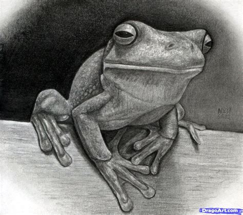 how to draw a realistic how to draw a realistic frog white lipped tree frog step by step fresh water