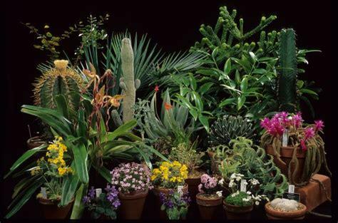 images of plants royal botanic garden edinburgh research plant collections