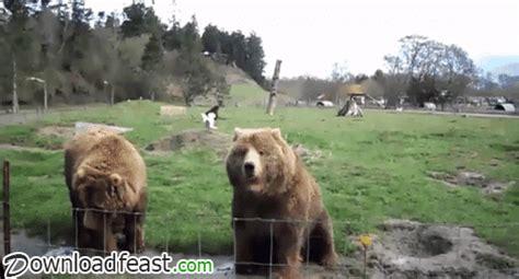 Bear hat guy gun webcam gif