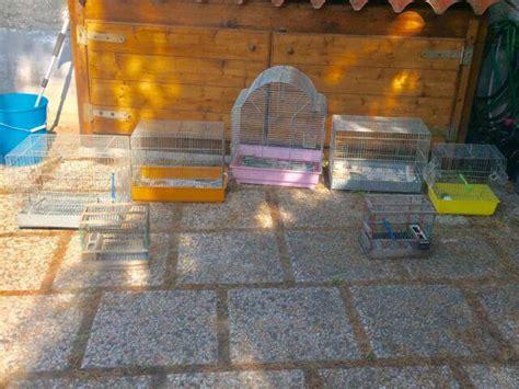gabbie per bengalini cardellini canarini gabbie animali settembre clasf