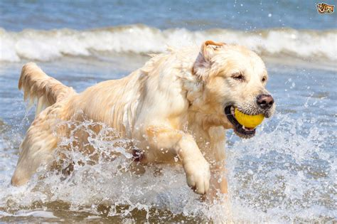 are dogs tips for exercising and tiring out a active pets4homes