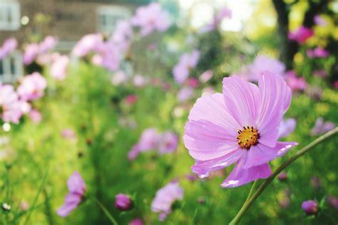 The Best Annual Flowers For Full Sun Garden Flowers Annuals