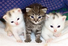 Cute Cats and Kittens