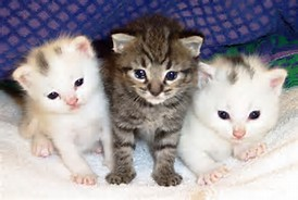 About Cats and Kittens