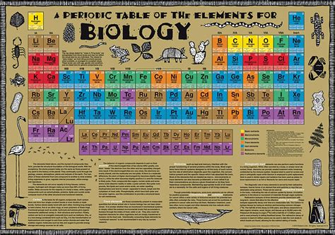 periodic table wall chart biology periodic tables and wall charts
