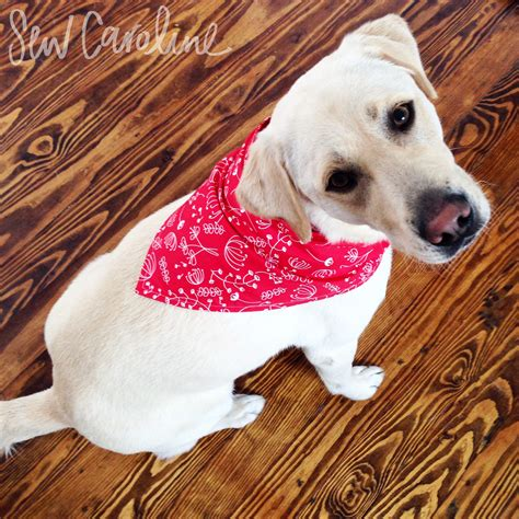 puppy bandanas bandana free pattern tutorial sewing patterns tutorials