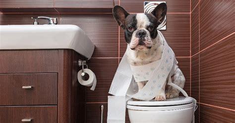 dogs going to the bathroom in the house les bonnes r 233 solutions de nos chiens et chats pour 2018