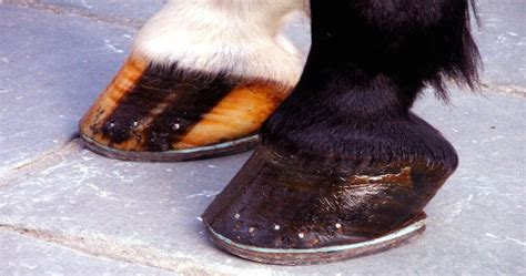 why do only some horses wear shoes