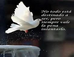 Download image Ver Imagenes De Amor Con Frases Bonitas Sep313 Jpg PC ...