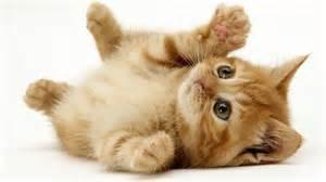 little_cute_cat_1920x1080.jpg