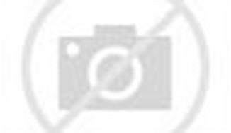 Black Fire Horse
