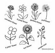 Drawing Flowers Pictures