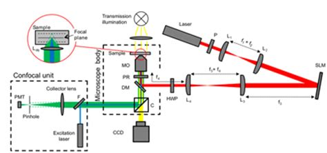 optically addressed spatial light modulator laser scanning optical trapping