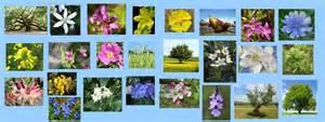 lista fiori di bach terapia flores de bach el de 224 nia