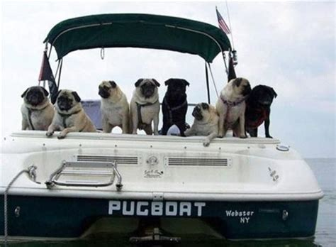 best boat names in the world top 10 weirdest and funniest boat names