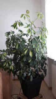 zimmerpflanzen in karlsruhe pflanzen garten g 252 nstige - Zimmerpflanzen Gross