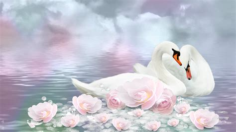 bird couple wallpaper hd swan hd wallpapers beautiful swan hd pictures images