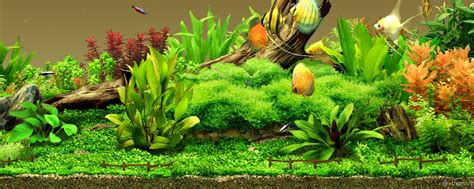 aquarium design wallpaper 25 aquarium backgrounds wallpapers images pictures