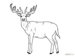 Home Amp Garden Home deer drawing best images collections hd for gadget