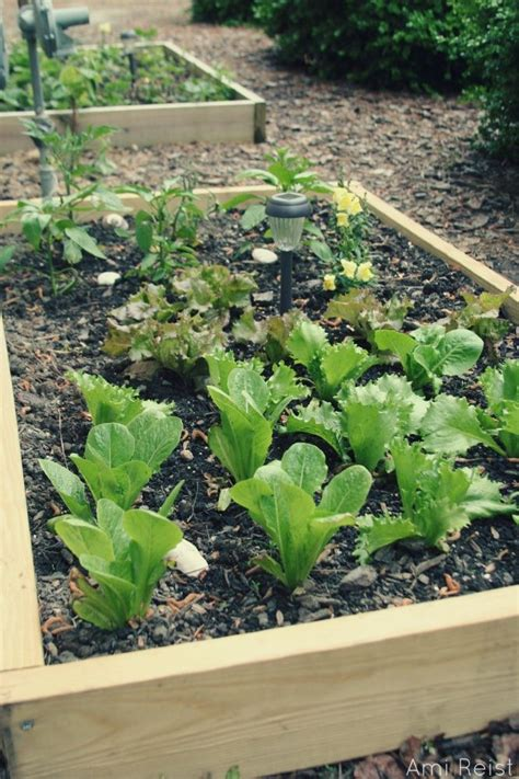Above Ground Vegetable Garden 17 Best Images About I Want An Above Ground Garden On