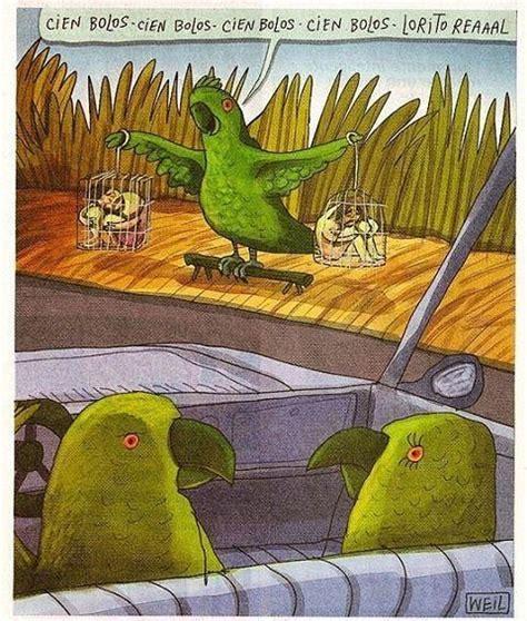 especies de pajaros silvestres pajaros de nuestros cos m 225 s de 25 ideas incre 237 bles sobre nidos de aves en pinterest