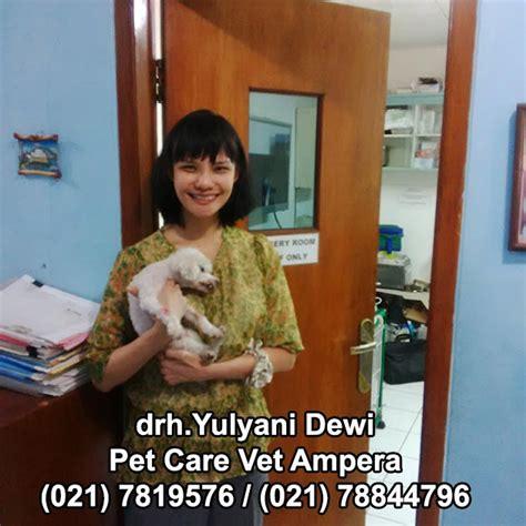 Pembersihan Karang Gigi Di Rumah Sakit pembersihan karang gigi pada anjing kesehatan anjing anjingkita