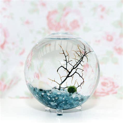 Vase Terrarium by Glass Vase Marimo Moss Terrarium By Dingading