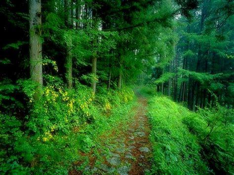 keindahan alam yang menghijau relaks minda