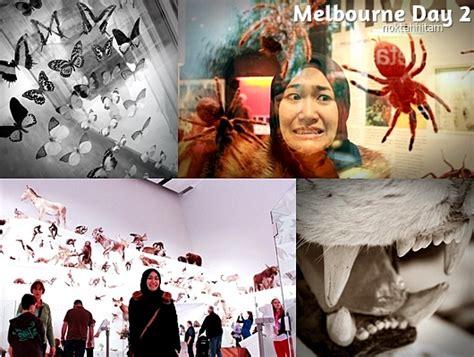 koala adora glasses hitam melbourne day 2 museum noktah hitam