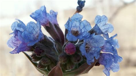wallpaper flower in pot blue flowers in a pot wallpaper 241027