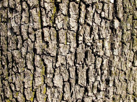 image gallery tree texture