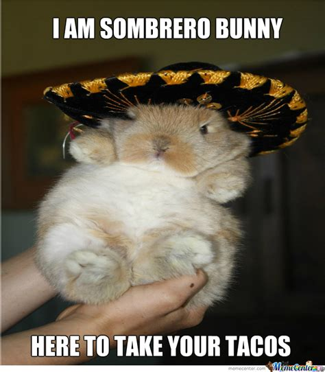 Bunny Meme - sobrero bunny by cuteasfuck meme center
