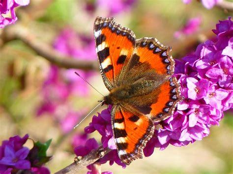 immagini farfalle e fiori come creare un giardino attira farfalle con piante e fiori