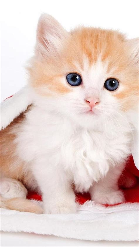 cute cat  santa hat iphone  wallpapers hd