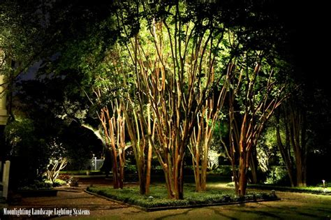 Tree Lights Landscape The Governor House Traditional Landscape Charleston By Moonlighting