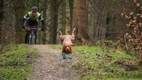 with dogs top tips to mountain bike with dogs