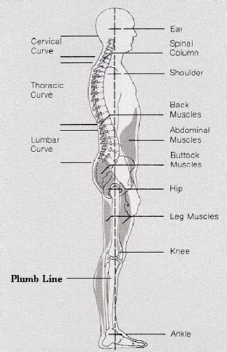 Plumb Line Assessment by Mann How Do You When Your Spine Is