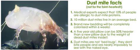 dust mites in bed 5 reasons to buy wool bedding woolroom
