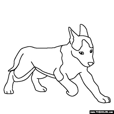 coloring pictures of huskies free coloring pages thecolor