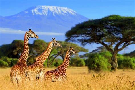 safari  south africa explore  worlds