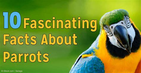 facts about green 10 interesting facts about parrots
