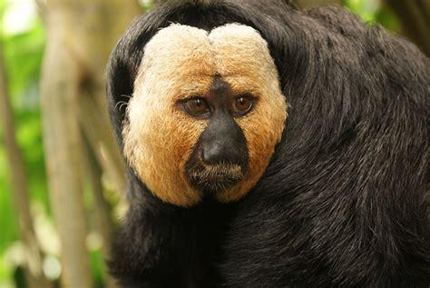 black monkey black monkey up by yoyoco on deviantart